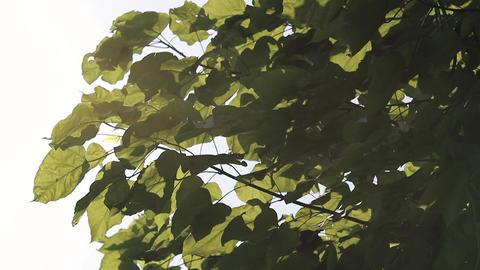 Sunshine Through Leaves Slider Shot ビデオ