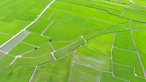 aerial view of rice field valley. taiwan Live影片