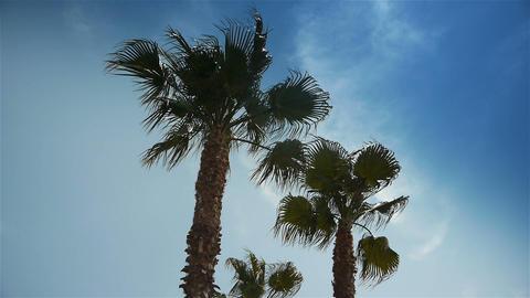 Palm trees at Cote D'Azur France Live Action
