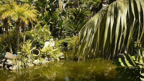 Park with tropical plants at Monaco, Cote D'Azur France Live Action