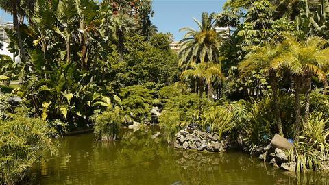 Park with mediterranean plants at Monaco, Cote D'Azur France Live Action