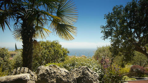 Palm trees and mediterranean sea at Monaco, Cote D'Azur France Live Action