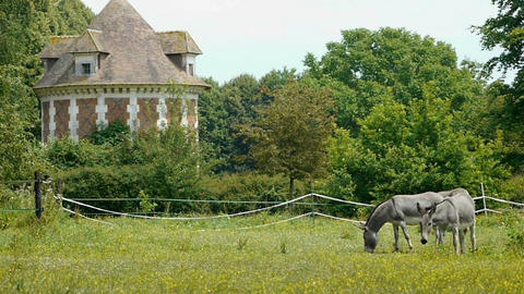Donkeys at a french castle Footage