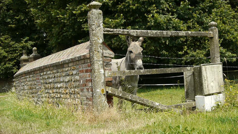 Old stone fence and a donkey at the countryside Footage