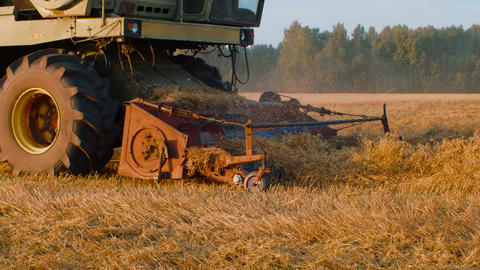 Industrial harvester harvesting autumn crop on autumn field in countryside Live Action
