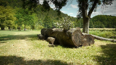 Felled tree at a botanical garden Footage