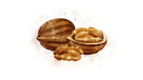 The Walnut illustration appearance Animation