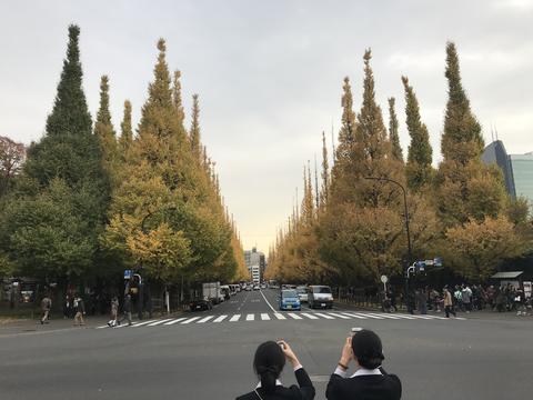 ginkgo avenue, Meiji-Jingu Gaien, Tokyo, Japan フォト
