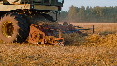 Combine harvester cutting oat ears on autumn field Live Action