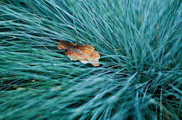 Autumnal Dry Leaf In Light Green Marvelour Grass Photo