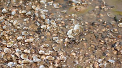 Wet colored seashells on the beach, river ビデオ