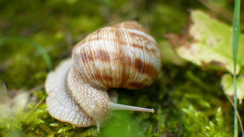 the snail crawls in the green grass Archivo