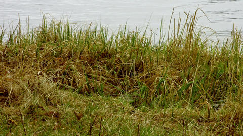 The grass by the river Footage