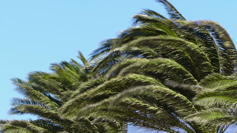 Palms and wind Archivo