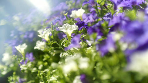 White and Purple Flowers on Sunny Day ビデオ