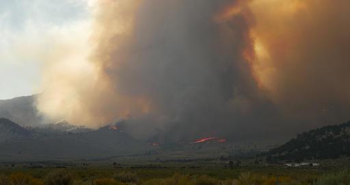 Forest Fire Burning Mountainside ビデオ