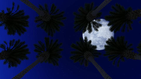 Palm Trees Under the Moon Animation