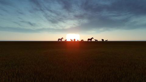 Horses graze in meadows Animation