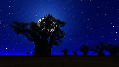 African Savanna Night CG動画素材