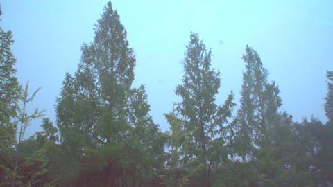 4K 風に揺れる木々 ライブ動画