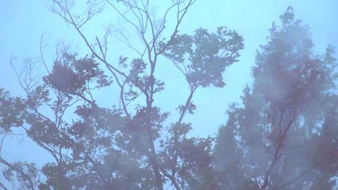 4K 風に揺れる木々と雨 ライブ動画