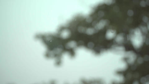 4K The tree swaying in the wind Footage