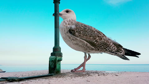 Seagull Standing On The Wall With Blue Sky And The Sea In The Background GIF