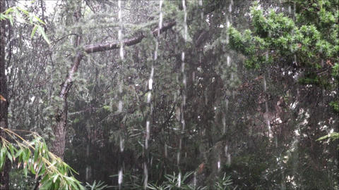 Slow motion downpour at the backyard Archivo