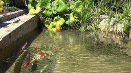 France Cote d'Azur Villefranche sur Mer gold fish pond in small park GIF