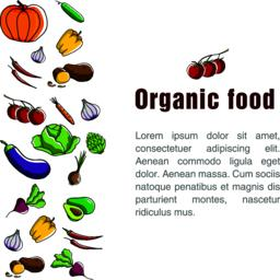 Flyer for organic food ベクター