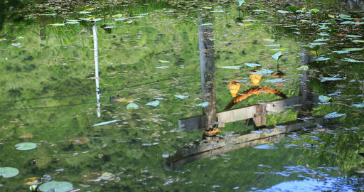 Reflecting shrine gateway on the surface of the water middle shot ビデオ