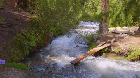 Dangerous bridge of wooden planks over stormy river in green forest Footage
