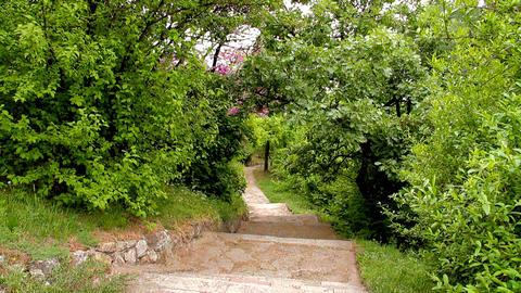 Romantic Path 04 Stock Video Footage
