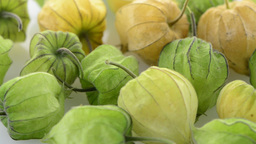 Physalis fruit Stock Video Footage