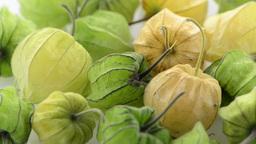 Physalis fruit Footage