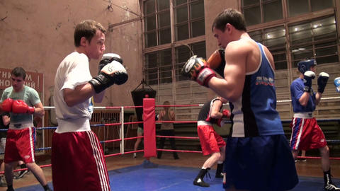 Boxers in training Footage