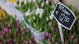 Selling tulips in Amsterdam market Footage