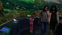 People in an Underwater Tunnel Aquarium Stock Video Footage