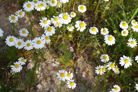 Beautiful flowers blooming in the garden, Bodrum Turkey Photo