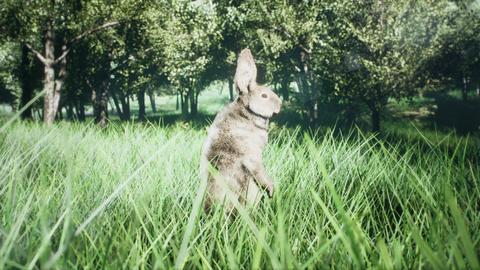 Little cute wild rabbit run away and hiding in the grass GIF