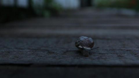 Snail Crawling At Night Footage