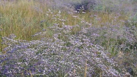 Meadow flowers swing from the wind Footage