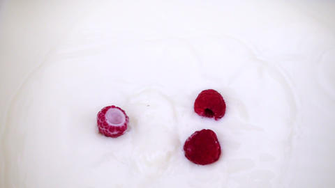 A ripe raspberry falls into the milk. Video of berry on isolated white 영상물