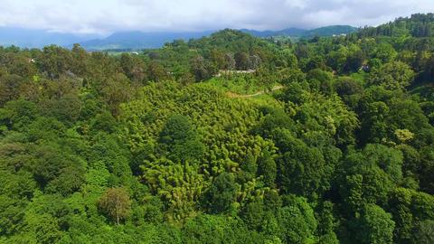 Hills covered in lush greenery in Batumi Botanical Garden railroad running along Footage