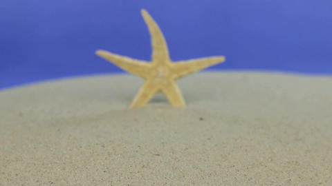 Approaching the starfish standing in the sand. Isolated Footage
