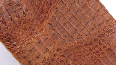 Rotation, natural reptile skin, can be used as background, texture. Isolated Footage