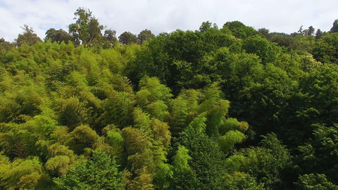 Lush greenery covering hillsides of park, national sanctuary, preserving nature Live Action