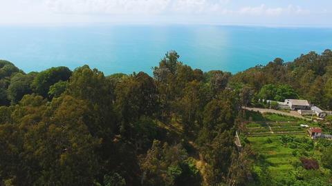 Green hillsides of Botanical Garden in Batumi Georgia with Black Sea at back Footage