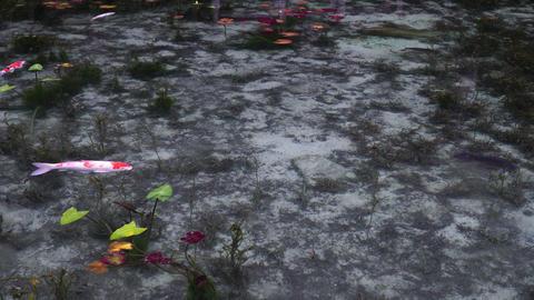 Beautiful koi pond Live Action