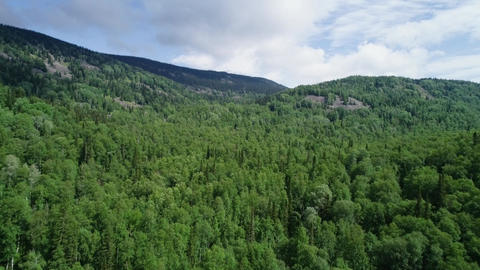 A view from above of wildlife. Panoramic view of the forest thicket in the Footage
